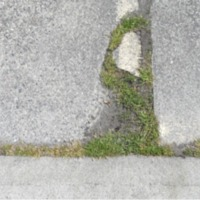 A-8_Student-photo-grass.png